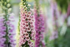 Assorted colored bell flowers Stock Photo