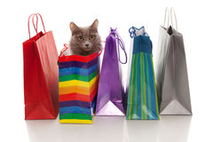 We have bought a cat!. Assorted colored shopping bags and a cat in one of them  on a white background Stock Photos