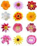 Assorted colorful flower collection Royalty Free Stock Images