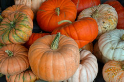 Assorted colorful pumpkins Stock Photography