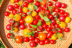 Assorted colorful tomatoes Stock Image