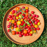 Assorted colorful tomatoes Stock Photo