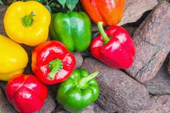 Assorted colorful varieties of sweet peppers Stock Photo