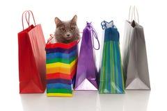 Nós compramos um gato! Fotos de Stock
