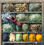 Assorted culinary herbs and spices Royalty Free Stock Images