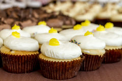 Assorted Cupcakes on Display. Lemon filled lemon cupcakes sitting on display table Royalty Free Stock Photos