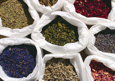 Assorted dried herbs Stock Photography