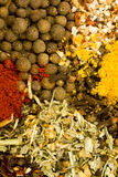 Assorted dried herbs and spices Royalty Free Stock Photography