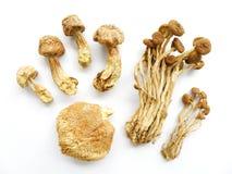 assorted dried mushrooms Στοκ φωτογραφίες με δικαίωμα ελεύθερης χρήσης