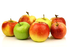 Assorted Dutch apple cultivars Stock Photos