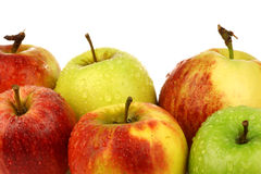 Assorted Dutch apple cultivars Stock Photography