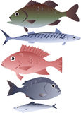 Assorted edible fish. Popular species of commercially harvested fish, including bass, mackerel, snapper, tilapia and herring, EPS 8 vector illustration, no Stock Image
