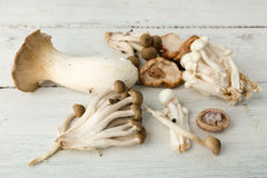 Assorted edible mushrooms Royalty Free Stock Photo