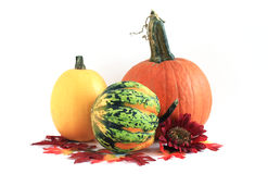 Assorted Fall Squash - Isolated Royalty Free Stock Photos