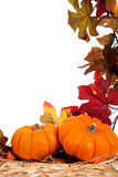 Assorted fall vegetables as a background Stock Image