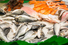 Assorted fish Royalty Free Stock Image