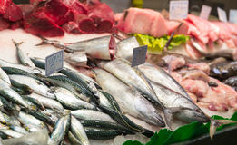 Assorted fish Stock Images