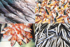 Assorted fish and seafood composition Royalty Free Stock Image