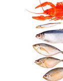 Assorted fish on white background with place for text royalty free stock image