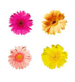 Assorted Flower (Gerbera) Colors. 16 megapixels Isolated Red, Pink, Orange, and Yellow gerbera with clipping path Stock Image