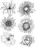 Assorted flower head sketches Royalty Free Stock Photos