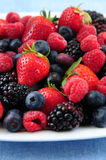 Assorted fresh berries Stock Images