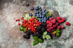 Assorted fresh berries with leaves Stock Image