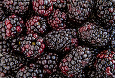 Assorted Fresh Berries and Pomegranate Seeds royalty free stock photography