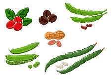 Assorted fresh cartoon legumes and nuts Stock Photo