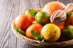 Assorted fresh citrus fruits. Stock Photo