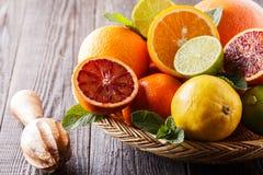 Assorted fresh citrus fruits. Stock Image