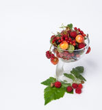 Assorted fresh fruit Stock Photography