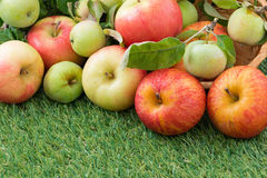 Assorted fresh garden apples on green grass, horizontal Stock Image