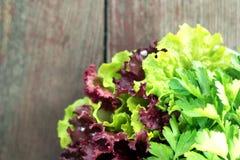 Assorted fresh herbs on a plate Stock Photos