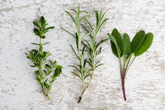 Assorted fresh Herbs Royalty Free Stock Photography