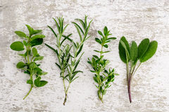 Assorted fresh Herbs Stock Photography
