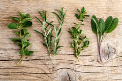 Assorted fresh Herbs Royalty Free Stock Photo