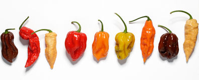 Assorted fresh organic peppers Royalty Free Stock Photography