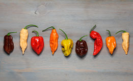 Assorted fresh organic red chili peppers, habanero. Colorful red and yellow sweet peppers and jalapeno Stock Image