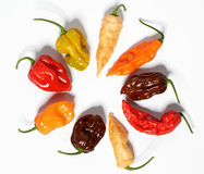 Assorted fresh organic red chili peppers, habanero. Colorful red and yellow sweet peppers and jalapeno Stock Photos