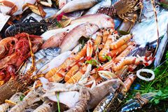 Assorted fresh raw ocean sea fishes seafood on the market. Sea urchins, mussels, oysters, squids, shrimps, lobsters, crabs. stock image