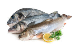 Assorted fresh seafood Royalty Free Stock Photography