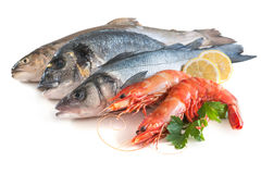 Assorted fresh seafood. Isolated on white background Royalty Free Stock Photos