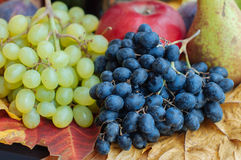 Assorted fruit. Grapes,apple and pear on leaf Royalty Free Stock Photo