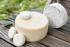 Assorted goat cheese Royalty Free Stock Images