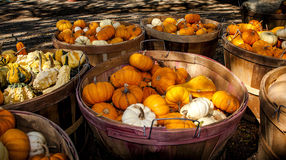 Assorted gourds for sale Royalty Free Stock Photo