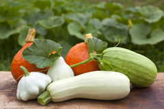 Assorted Gourds and Squash  Royalty Free Stock Photos