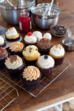 Assorted Gourmet Cupcakes Stock Images