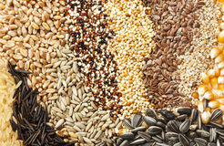 Assorted grains and seeds background Royalty Free Stock Image