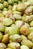Assorted green coconuts Stock Photography